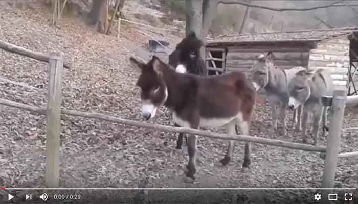 The Third Donkey has the right idea